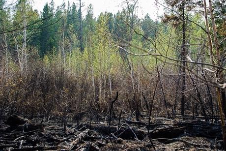 Последствия пожара. Автор фото — Илья Татарников