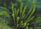 Фрагмент картины Юрия Алексеевва, подводный Байкал. Фотография с сайта www.irk.aif.ru
