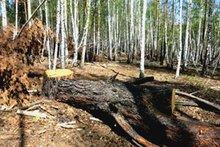 Вырубка леса. Фото ГУ МВД России по Иркутской области