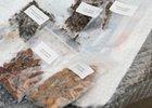 Уникальные семена. Фото пресс-службы городской администрации