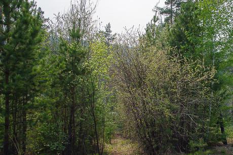 68-летний грибник пропал вУсть-Илимском районе