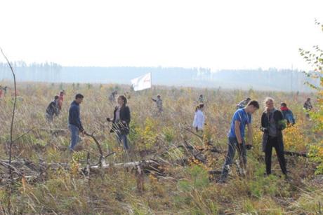 ВПриангарье высадили 40 тыс. сеянцев сосны