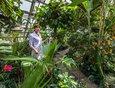 Оранжерея СИФИБР СО РАН – 500 квадратных метров вечного лета. Под стеклянным куполом живут более 400 видов субтропических растений. Родиной большинства из них являются Африка, Юго-Восточная Азия и Австралия.