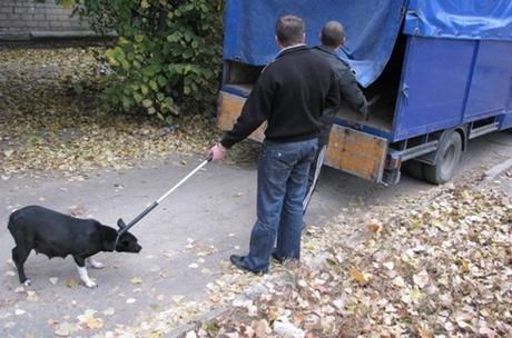 ВИркутске отловили 938 бездомных животных втечении следующего года
