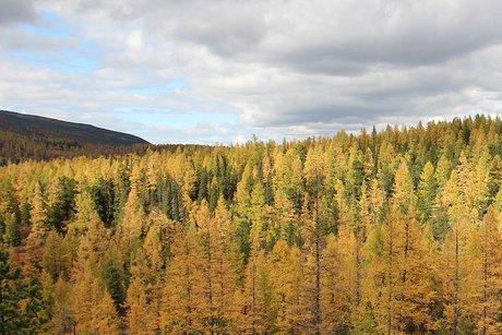 ВИркутской области зарегистрирован один лесной пожар наплощади 7 га