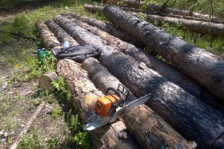 ВИркутской области «черного лесоруба» ловили сострельбой
