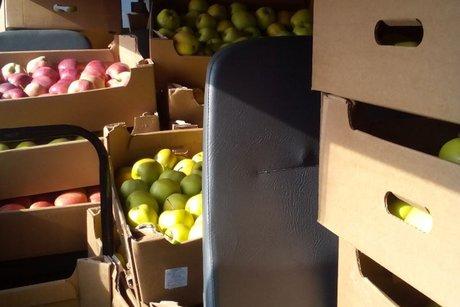 Всупермаркете «Аллея» выявлены запрещённые кввозу польские яблоки