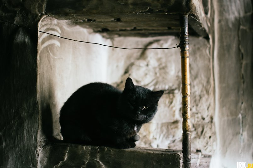 Кот Толя