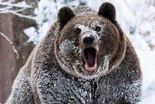 Фото с сайта www.ya-uznayu.ru
