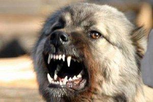 Собака. Фото с сайта kmv.gorodskoitelegraf.ru