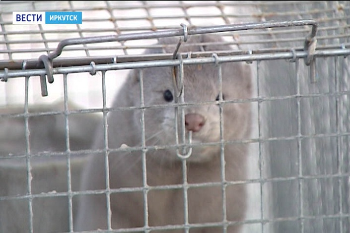 ВИркутске раскрываются новые места для зимнего отдыха городских жителей игостей города