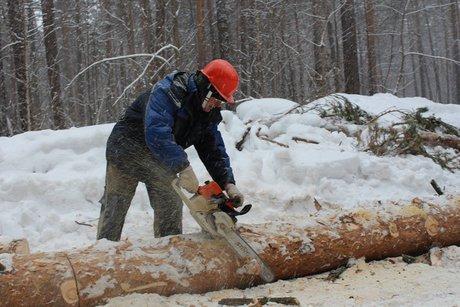Осужден экс-глава отдела агентства лесного хозяйства поБалаганскому лесничеству
