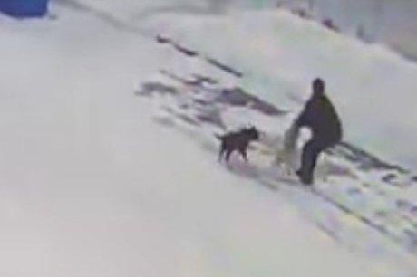 Подозреваемого вубийстве бездомной собаки наАЗС задержали вПриангарье
