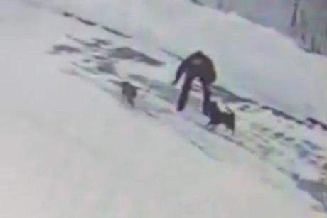СКР возбудил уголовное дело вотношении мужчины, убившего собаку вШелехове