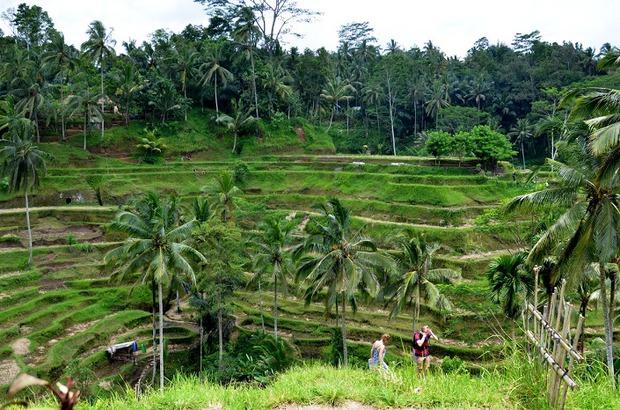 По знаменитым рисовым террасам можно прогуляться