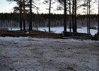 Вырубленные деревья. Фото ИА «Иркутск онлайн»