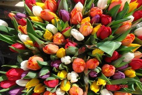 Жительница Черемхово напоролась нааферистов, заказывая тюльпаны всети интернет