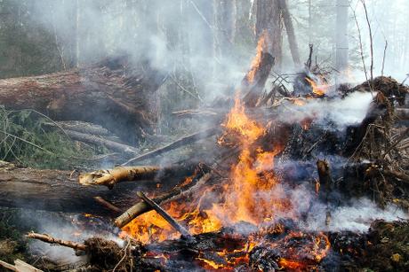 Росгидромет назвал Астраханскую область регионом с более сильными лесными пожарами