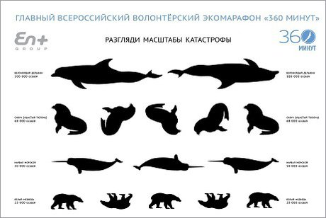 Иркутянам предлагают проверить зрение потаблице сизображениями уникальных животных