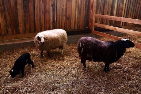 ВХомутово планируется проводить ярмарки сельскохозяйственных животных