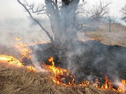 ВИркутской области начали гореть леса