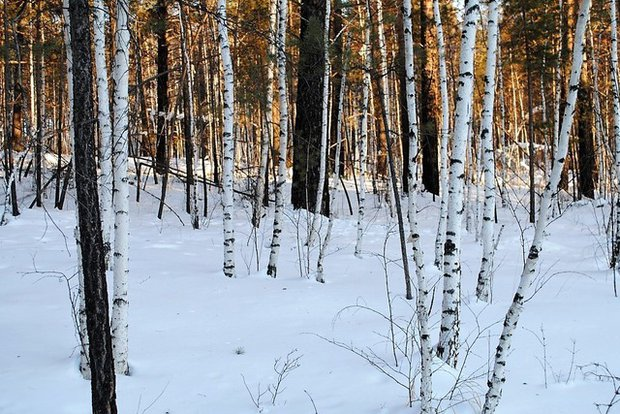 Участок на 17-м километре Байкальского тракта