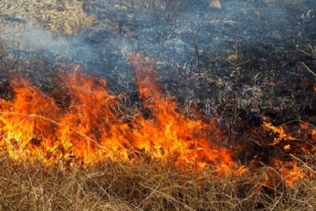 Пожар в лесу. Фото с сайта www.38.mchs.gov.ru