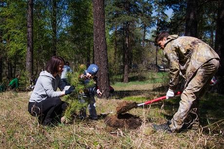 Иркутян приглашают напосадку деревьев вКайской роще