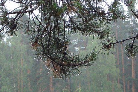 ВПриангарье потушены все лесные пожары