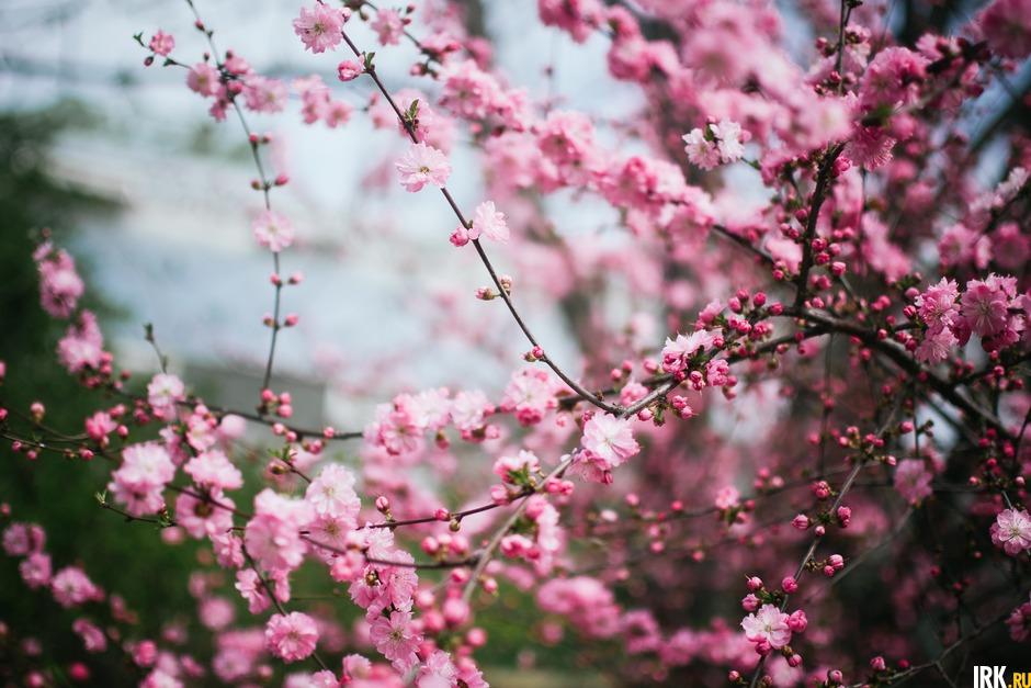 «Она была готова цвести еще 3-5 мая, а потом стало холодно, и она немного замерла. И мы все ждали когда же. В итоге она 12 мая активно расцвела», — рассказала Светлана Сизых.