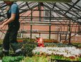 Производственные теплицы. Здесь выращивают рассаду однолетних цветов для озеленения клумб, в том числе ИГУ, и высадки на территории Ботсада.