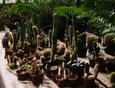 Коллекция кактусов Ботанического сада ИГУ насчитывает около 350 видов.