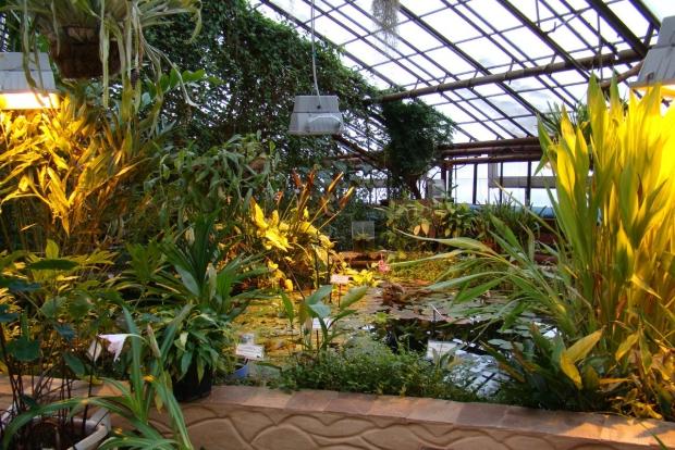 Фото с сайта vk.com/irkgarden
