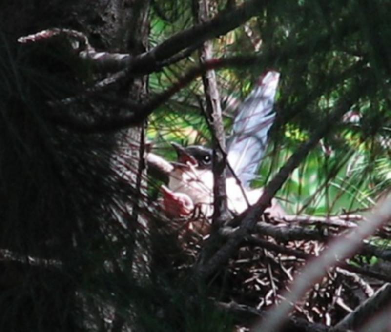 В гнезде с птенцом