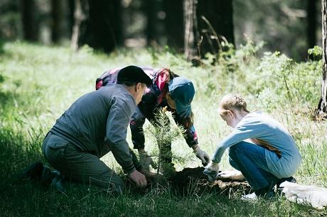 ВИркутской области высадят 400 тыс. сосен