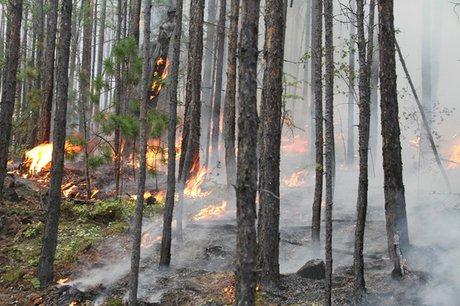 Два лесных пожара потушили 3июня вИркутской области