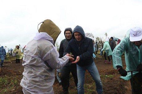 Активисты ОНФ посадили вИркутской области 400 тыс. новых деревьев