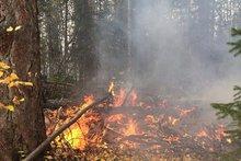 Лесной пожар в Усть-Кутском районе в 2016 году. Автор фото — Никита Пятков