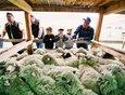 В рамках фестиваля состоялся конкурс по стрижке овец на скорость.