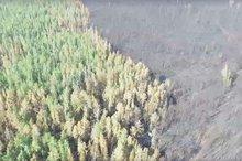 Фото пресс-службы министерства лесного комплекса Иркутской области