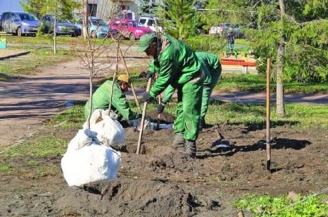 Сто деревьев планируют высадить наулице Карла Маркса