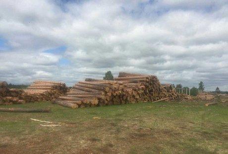 Работник Тайшетского лесхоза подозревается ворганизации рубок на1,5млнруб.