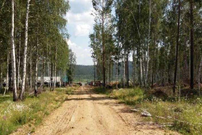 Плишкинский лес. Фото ИА «Иркутск онлайн»