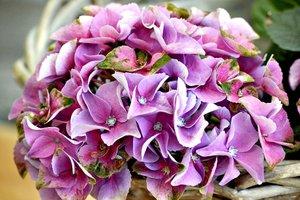 Информация предоставлена пресс-службой Иркутского областного краеведческого музея. Фото с сайта www.pixabay.com