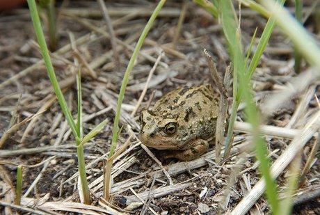 Наберегу озера Байкал создается заповедник для краснокнижных жаб