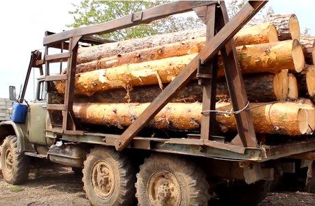 Жительница Приангарья подозревается всоздании 6 бригад «черных» лесорубов