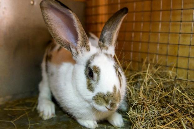 Кролик в Иркутском зоосаде. Автор фото -- Евгений Рувинский