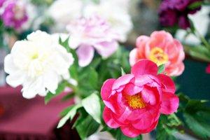 Выставка комнатных растений «Цветочный Иркутск»