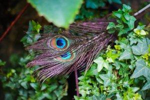 Воскресная встреча в Ботаническом саду. Экскурсия-игра «По следам птицы Феникс»