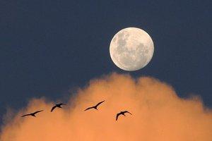 Осенняя ночь тротуарной астрономии